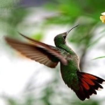 Epson Colibri